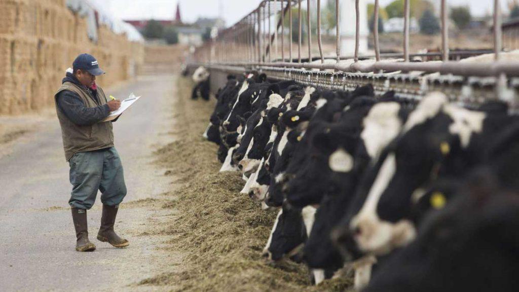 livestock auction software